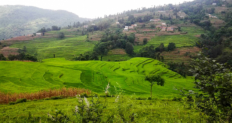 nagarkot terrace farming