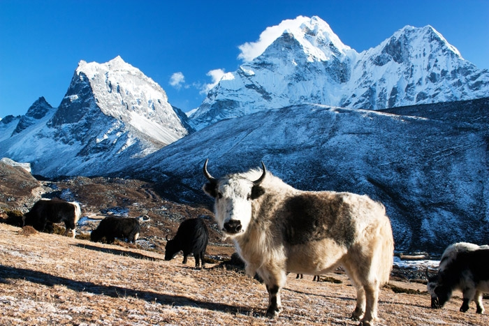 Wilderness-Nepal
