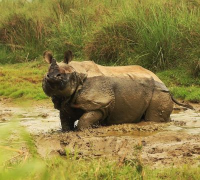 Chitwan - A must Destination for a Nature Lover