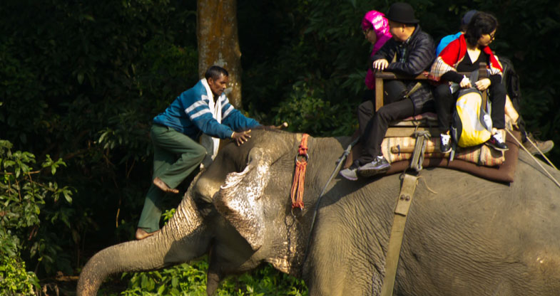 Mahout on Elephant's Trunk