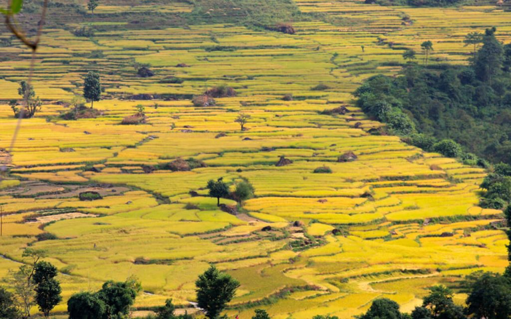 Rice Field in the hilly area of the manaslu