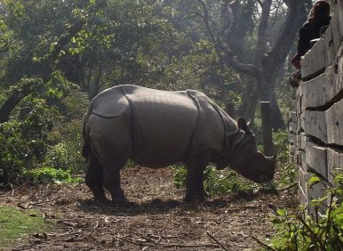 Bardiya National Park Jungle Safari