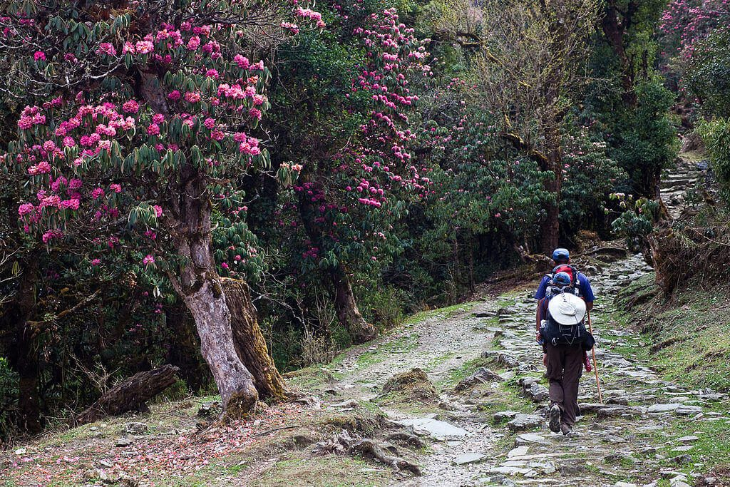 Physical Fitness for 2-Day Treks in Nepal