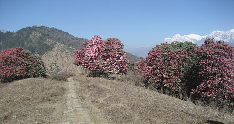 7 days Ghorepani – Poonhill – Ghandruk Trek (3)