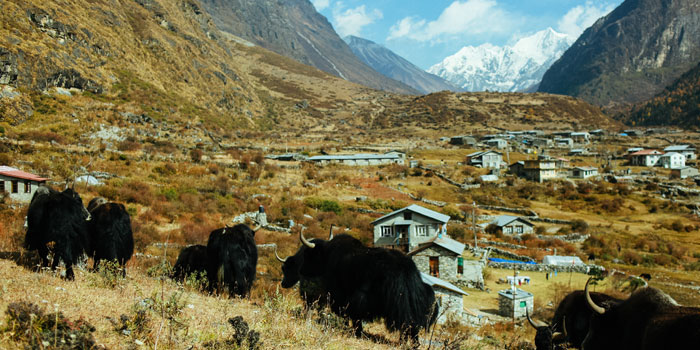 8 days Langtang Valley Trek2