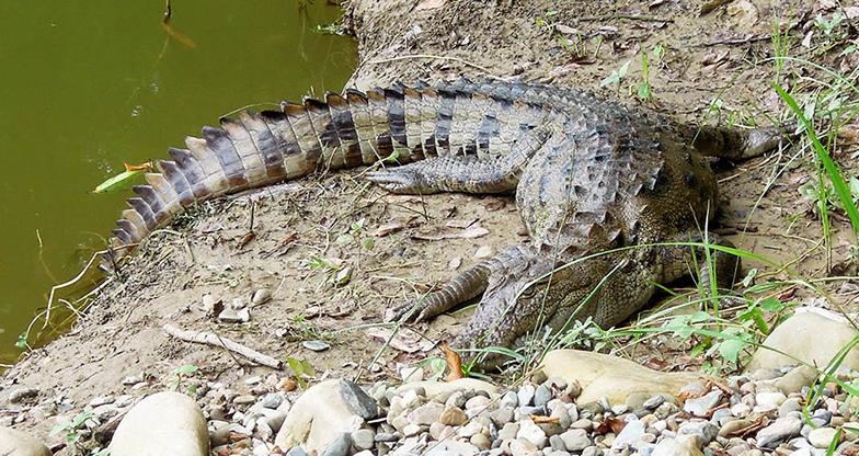 Bardiya National Park Jungle Safari (2)
