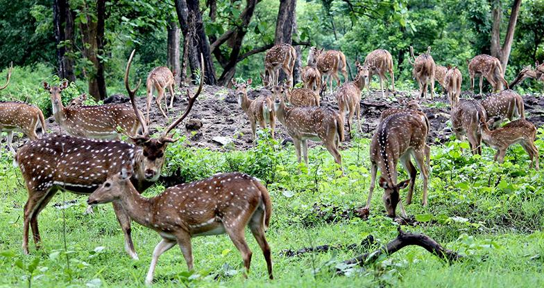 Bardiya National Park Jungle Safari (3)