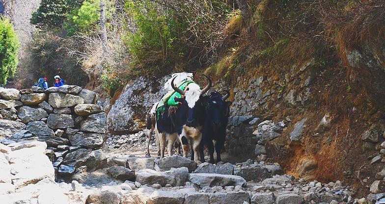 Gokyo-Renjo-La Pass Trek1