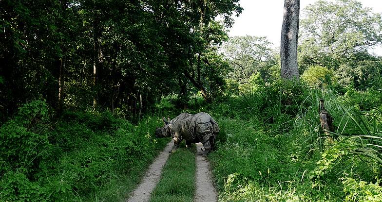 Jungle Safari at Chitwan National Park (10)