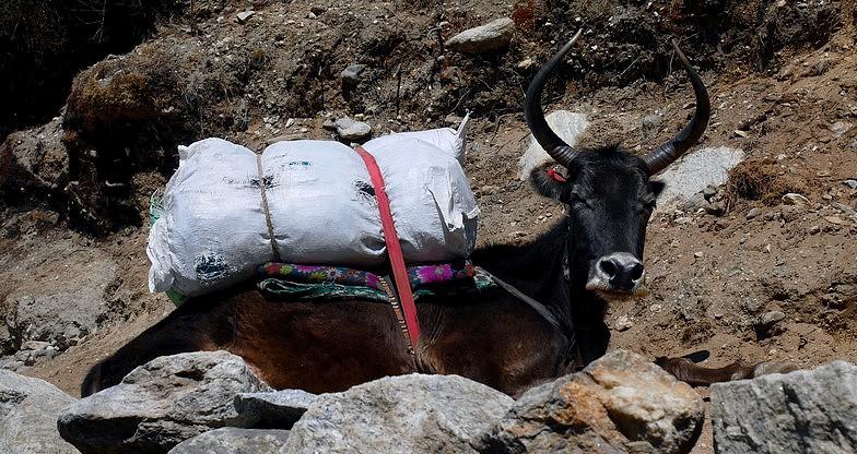 12 days Everest Base Camp – Kalapathar Trek5