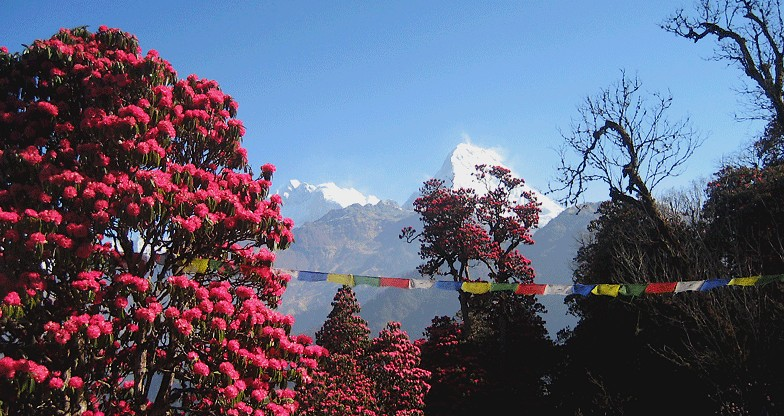 9 days Annapurna Panorama Trek (7)